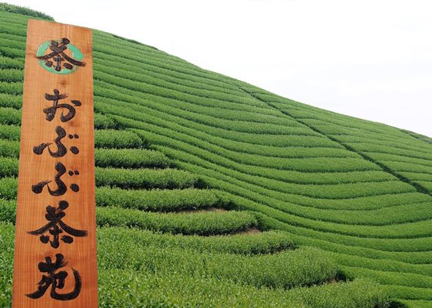 京都おぶぶ茶苑アイキャッチ